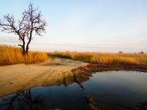一棵唯一树在与黄色草的一个领域站立 图库摄影