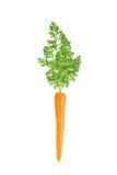 一棵唯一红萝卜 免版税库存照片