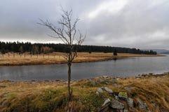 一棵唯一落叶树在河床上 免版税库存照片