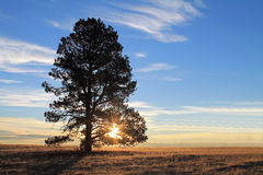 一棵唯一高大的树木的Silhoutte在日出的 库存图片