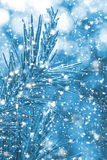 一棵圣诞树的分支与落的雪的 新年度 图库摄影