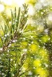 一棵圣诞树的分支与落的雪的 图库摄影