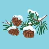 一棵圣诞树的分支与锥体的 冷杉木动画片分支与雪的 孩子的冬天例证 向量例证