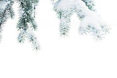 一棵圣诞树的分支与雪的在白色背景  库存照片
