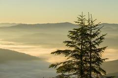 一棵圣诞树的剪影在以喀尔巴阡山脉为背景的黎明在夏天 乌克兰 库存照片