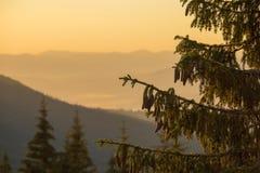 一棵圣诞树的剪影在日出的以喀尔巴阡山脉为背景在夏天 乌克兰 库存图片
