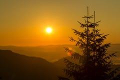 一棵圣诞树的剪影在日出的以喀尔巴阡山脉为背景在夏天 乌克兰 免版税库存照片