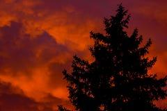 一棵圣诞树的剪影在日落背景的 库存照片