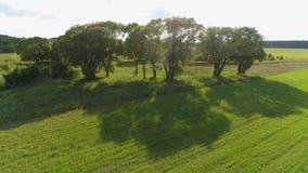 一棵在农田的美丽的树阴影的寄生虫空中英尺长度 影视素材