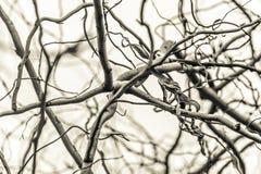 一棵多枝树的看法 库存图片