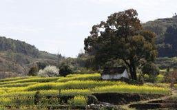 一棵大树和一个小屋以黄色在山坡 免版税库存照片