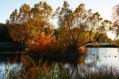 一棵大树在一个小海岛上在湖的中心增长 免版税库存照片