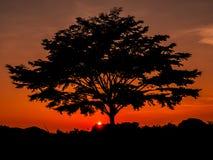 一棵大树是剪影在橙色天空 库存图片