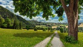 一棵大树,有花的一个草甸,一个夏天晴天 免版税库存照片