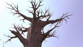一棵大死的树 库存照片