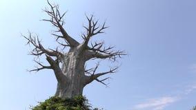 一棵大死的树 免版税库存图片