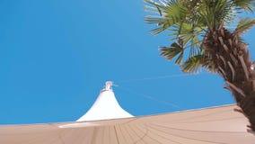一棵大白色帐篷和热带棕榈树的看法反对天空蔚蓝 股票视频