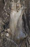 一棵大,四季不断的树的树干 免版税图库摄影