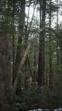一棵奇怪的树 免版税库存图片
