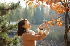 一棵妇女和Ginko树在秋天 免版税图库摄影