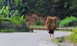 一棵妇女运载的草在Hagiang,越南 免版税库存图片