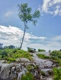 一棵孤立树和长凳在小山顶 库存图片