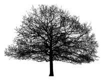 一棵孤立树的剪影 免版税图库摄影