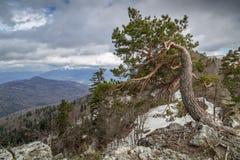 一棵孤立树的自然弯 免版税库存照片