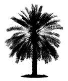 一棵孤立棕榈的剪影 免版税库存照片