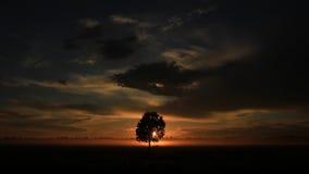 一棵孤零零树,俄罗斯 免版税库存照片