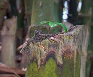 一棵小树在树增长 库存图片