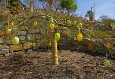 一棵小树的看法与复活节装饰的与绿色和黄色绘了鸡蛋 免版税库存图片