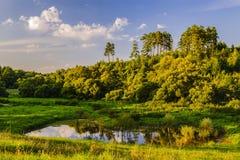 一棵小森林湖灌木和高杉树在落日的光芒的一个夏日结束时 库存照片