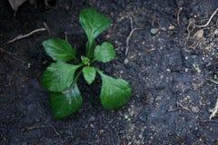 一棵小植物在土壤新的生活中 图库摄影