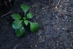 一棵小植物在土壤新的生活中 库存照片