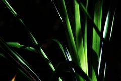 一棵小植物的抽象照片有太阳的在它的绿色叶子 库存图片