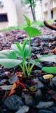 一棵小的挖沟的植物 库存图片