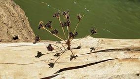 一棵干植物在一个树干的A孔黏附了在创造一个多维结构的Hermon河上用它的阴影,以色列 库存图片