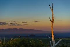 一棵干燥树早晨欢迎太阳 库存图片