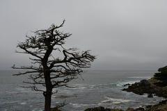 一棵干燥树的剪影在海岸的 免版税库存照片