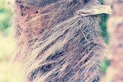 一棵年轻棕榈树的树干-抽象背景 免版税图库摄影