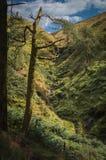 一棵损坏的杉树构筑小瀑布 库存图片