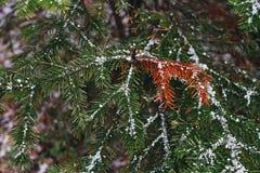 一棵新年树的一个绿色分支与红色针和雪花的在期间降雪在冬天 免版税库存图片