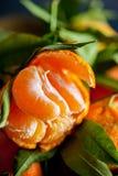 一棵新鲜的被剥皮的水多的柑桔的特写镜头与绿色叶子的 图库摄影