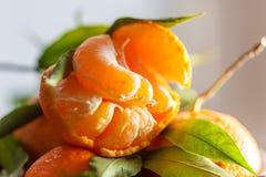 一棵新鲜的被剥皮的水多的柑桔的特写镜头与绿色叶子的 免版税库存照片