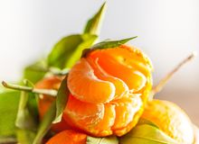 一棵新鲜的被剥皮的水多的柑桔的特写镜头与绿色叶子的 库存照片