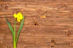 一棵春天黄色水仙在与空间的土气木板条开花文本的 免版税库存照片