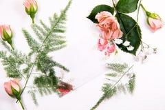 一棵春黄菊蕨的花在白色背景的与题字和bussines卡片的一个地方 免版税库存图片
