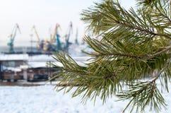 一棵杉木的分支在被弄脏的背景工业风景的 库存照片