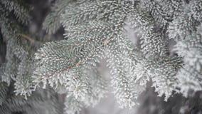 一棵杉木的积雪的分支在冬天公园 抽象空白背景圣诞节黑暗的装饰设计模式红色的星形 股票视频